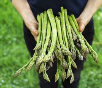 Asparagus is a great tasting food that starts with the letter a!